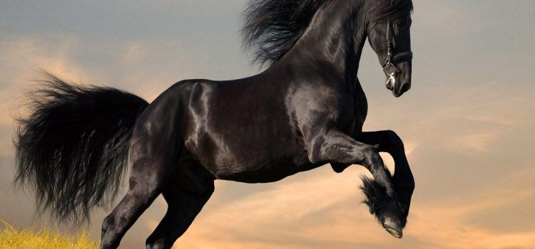 Dark Horse Là Gì?