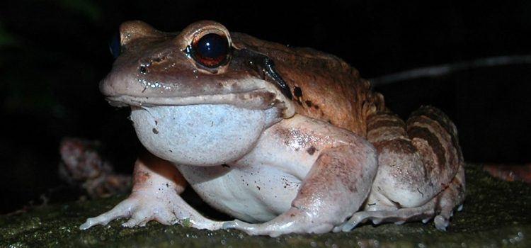 Frog Là Gì? Những Điều Thú Vị Về Frog – Có Thể Bạn Chưa Biết