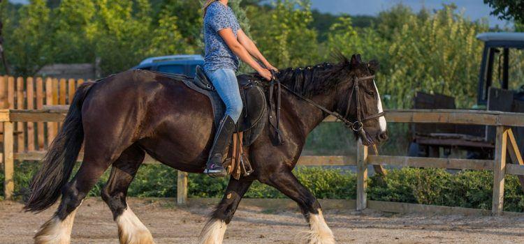Horse Riding Là Gì – Những Điều Thú Vị Từ Bộ Môn Này