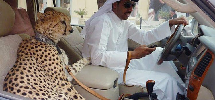Thú Cưng Ở Dubai – Những Điều Kỳ Lạ Chỉ Có Ở Đất Nước Này